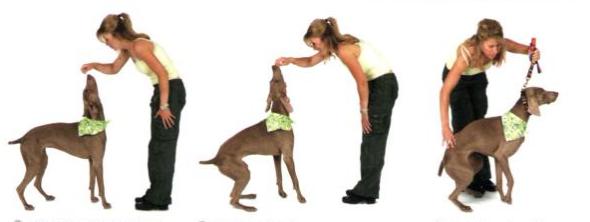 Naučite psa da sjedne