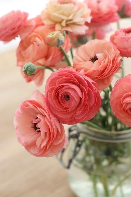 Kako da cvijeće duže traje rezano cvijece